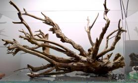 这样的沉木就算不造景看着都舒心呢