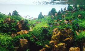 鱼缸水草造景鱼缸水草造景沉木杜鹃根 Ⅲ