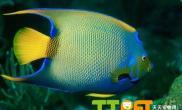 新手饲养热带观赏鱼的注意事项