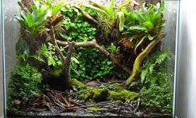 TOO作品水陆雨林生态缸
