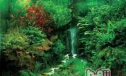 花青素对水草的影响
