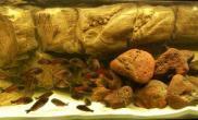 沉木青龙石原生态鱼缸akvaforum原石