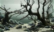 水下树林景
