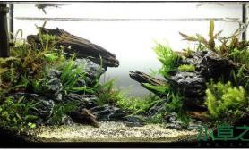 水草造景鱼缸沉木造景