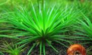 热带水草的种植经验