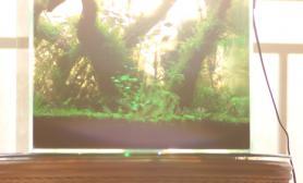 40方缸实验田水草缸建缸1个月鱼缸水族箱