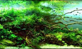 水草造景---回到过去