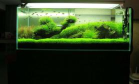 水草造景再来一缸成景的照片水草缸满满的都是绿沉木杜鹃根青龙石水草泥