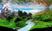 最逼真水草造景展(一),哪个才是你的最爱?