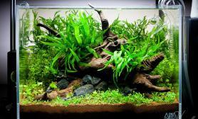 水草缸造景沉木水草泥化妆砂青龙石45CM及以下尺寸设计24