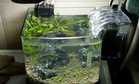 鱼缸造景新手水草缸新开了一个18CM的小缸练练水草缸请大家给点意见