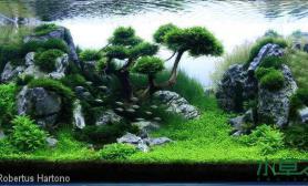 水草造景鱼缸造景图片