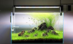 60CM火山石牛毛毡水草造景图案例
