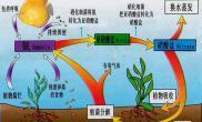 最完美水族造景之生态平衡下的氮循环(五)(图)