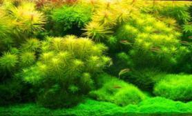 水草缸造景沉木水草泥化妆砂青龙石150CM及以上尺寸设计03