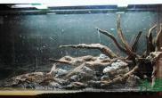 新手区水草缸值得一看的水草造景步骤鱼缸水族箱鱼缸水族箱
