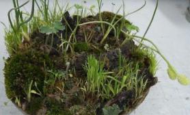 买了些干苔藓做了个小水路缸