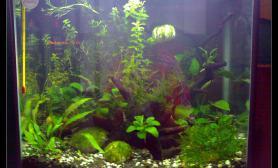 水草造景以前的杂虾缸