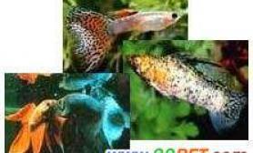 关于热带鱼的概念(多图)