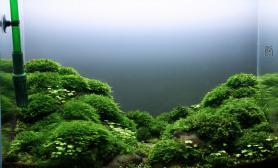 水草缸造景沉木水草泥化妆砂青龙石60CM尺寸设计11