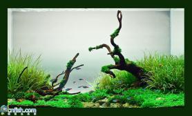 水草缸造景沉木水草泥化妆砂青龙石60CM尺寸设计09