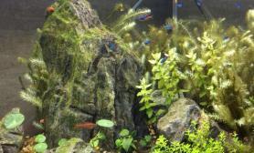 大神们帮忙出出主意水草缸这藻怎么处理