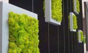 让人垂涎三尺的微景观水草缸请先把口水擦干再来欣赏吧(二)