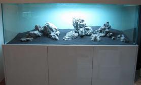 水草造景作品:水草造景(180cm)-55