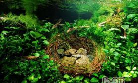 金鱼草锈病症状及治疗
