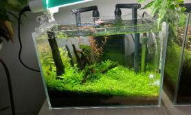 小小水草缸鉴赏