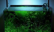 再上个一年多的懒人缸鱼缸水草造景图片