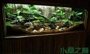雨林生态缸