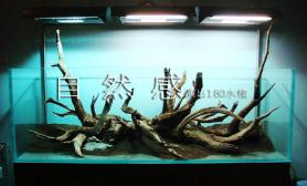 原创造景鉴赏水之森水景空间180水景探秘作品设计