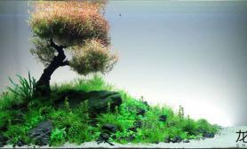 莫斯树见多了水草缸来看看宫廷树