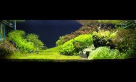 沉木青龙石水草造景120CM尺寸设计11