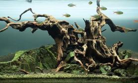 轮回造景(一棵树的诞生、成长和死亡)
