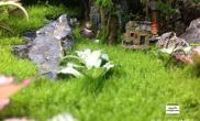 水草造景《天池》 苔藓的各种美