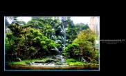 泰国29届水族邀请赛,造景部分参赛作品