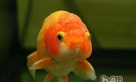 用浮萍喂鱼的禁忌