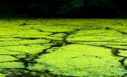 从富营养化的观点论证藻类滋生与氮和磷的关系