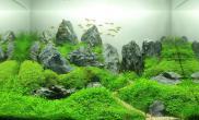 水草造景作品:水草造景(60cm)-50