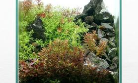 水草缸造景沉木水草泥化妆砂青龙石45CM及以下尺寸设计25
