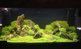 简单清爽的石景缸水草缸来看一看吧