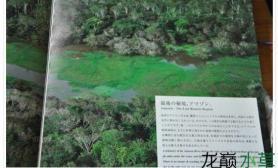 莫丝树造景水草缸成景前后区别很大