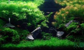 水草造景水草缸创意很重要鱼缸水族箱