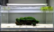 这几种清新的造景水草缸你喜欢哪一款呢?