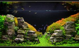 Aquascape of the Month: Peruvian Nights