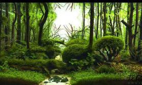 一图流——《迷路森林》