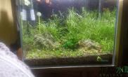 水草造景刚刚翻新的小草缸