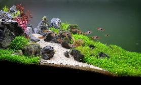 日本Charm水草造景比赛-05